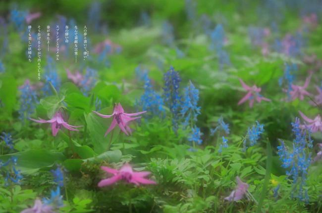 米 美知子 写真集 詩的憧憬